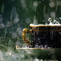 Rainy_teacup_Neal.