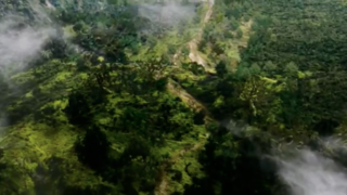 Terra_nova_jungle