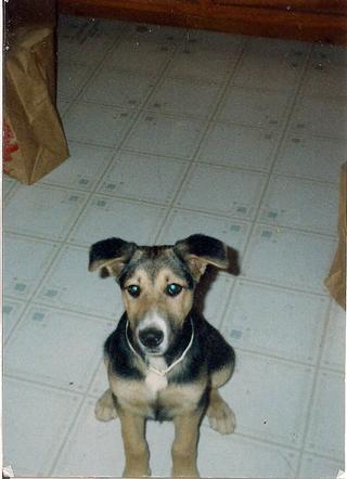 Truce_puppy_dog